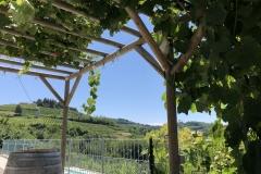 Vinrankene gir god skygge til pergolaen.