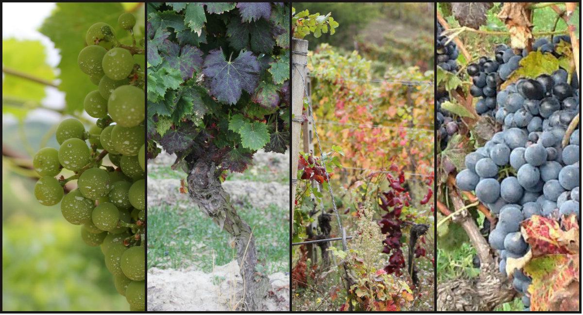vinmarken
