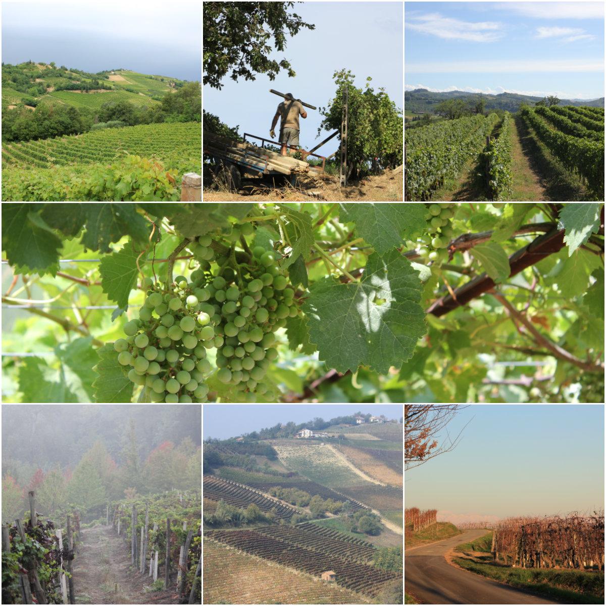 vinmarkene